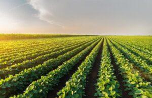 Cia-Agricoltori Italiani: «Investimenti in agricoltura? Serve un superbonus hi tech»