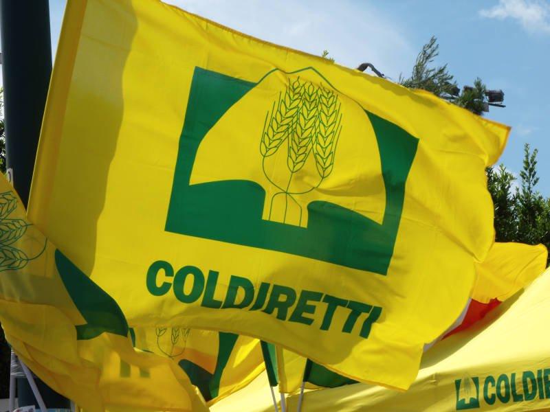 Coldiretti: «Nel 2020 ha resistito solo il comparto alimentare»