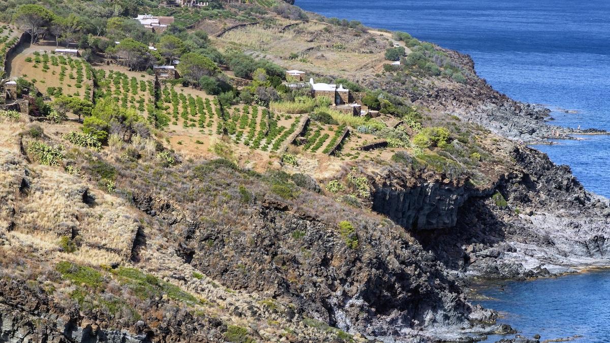 Pantelleria Youth Forum Sviluppo Sostenibile