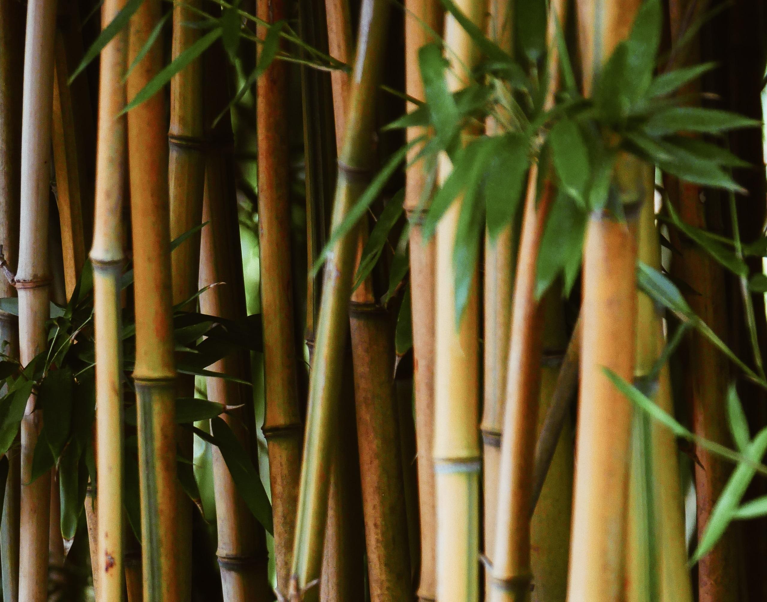 Banca Ossigeno saveHuman e Forever Bambù