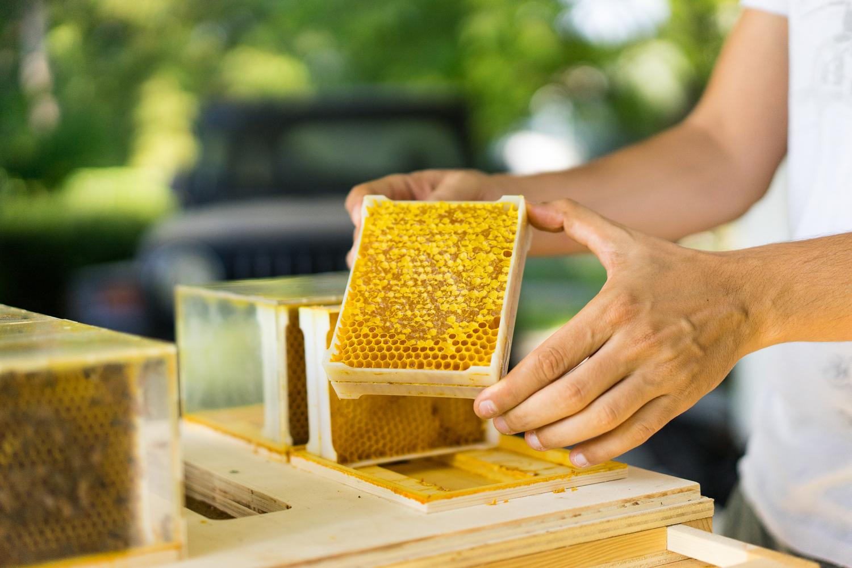 Bee Sostenibile